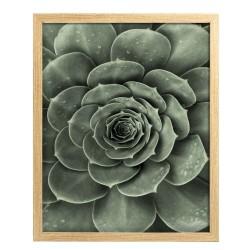 Image encadrée Suculent 30x40 cm baguette en bois FSC